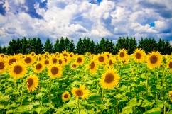 Sunny dreams